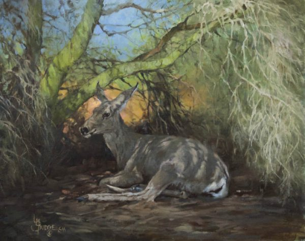 original oil painting by Linda Budge - A deer wrapped in shadows
