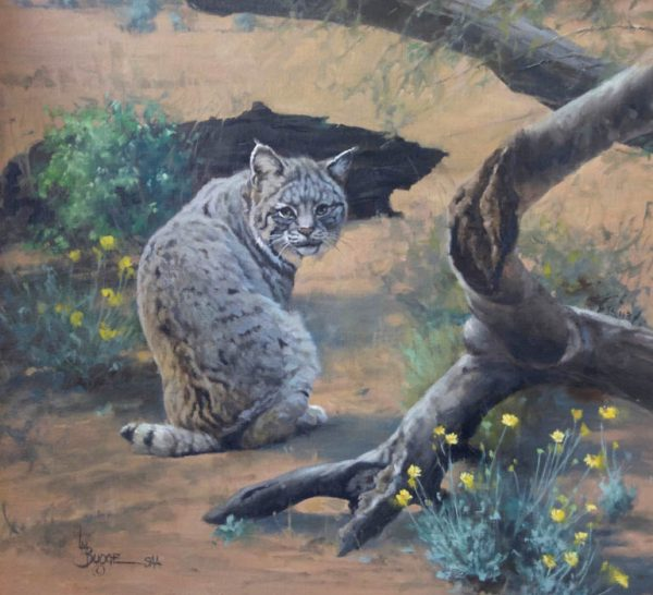 original oil painting by Linda Budge - meeting the unexpected bobcat