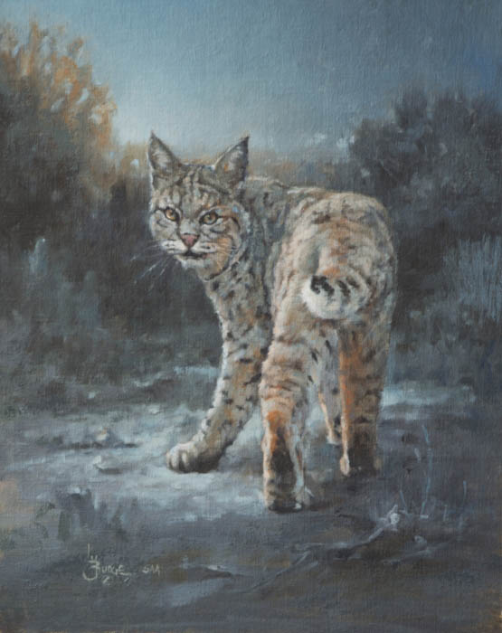 original oil painting by Linda Budge - bobcat in moonlight