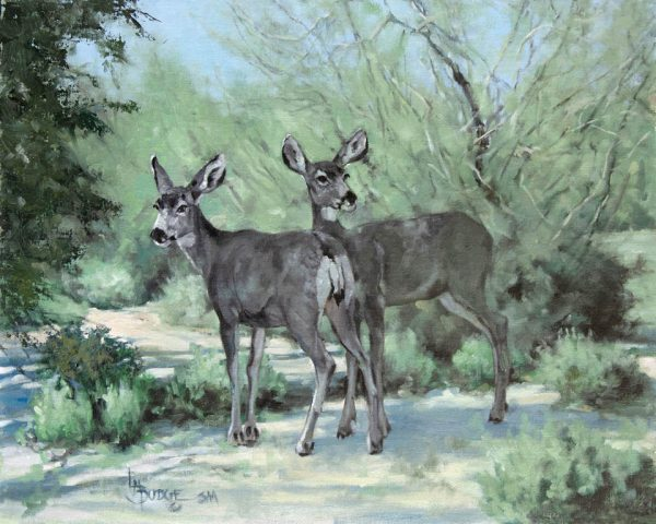 original oil painting by Linda Budge - deer in shadows - wonderful world