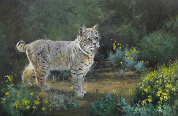 original oil painting by Linda Budge - bobcat - a cat determined