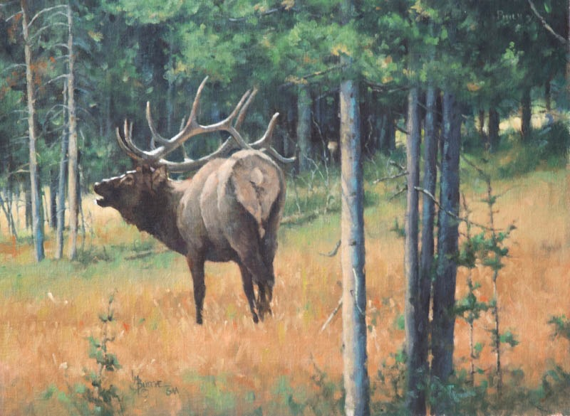 original oil painting by Linda Budge - bull elk