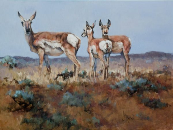 original oil painting by Linda Budge - ANTELOPE - morning sun