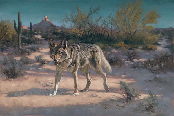 original oil painting by Linda Budge - wily coyote
