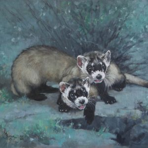 original oil painting by Linda Budge - black footed ferrets